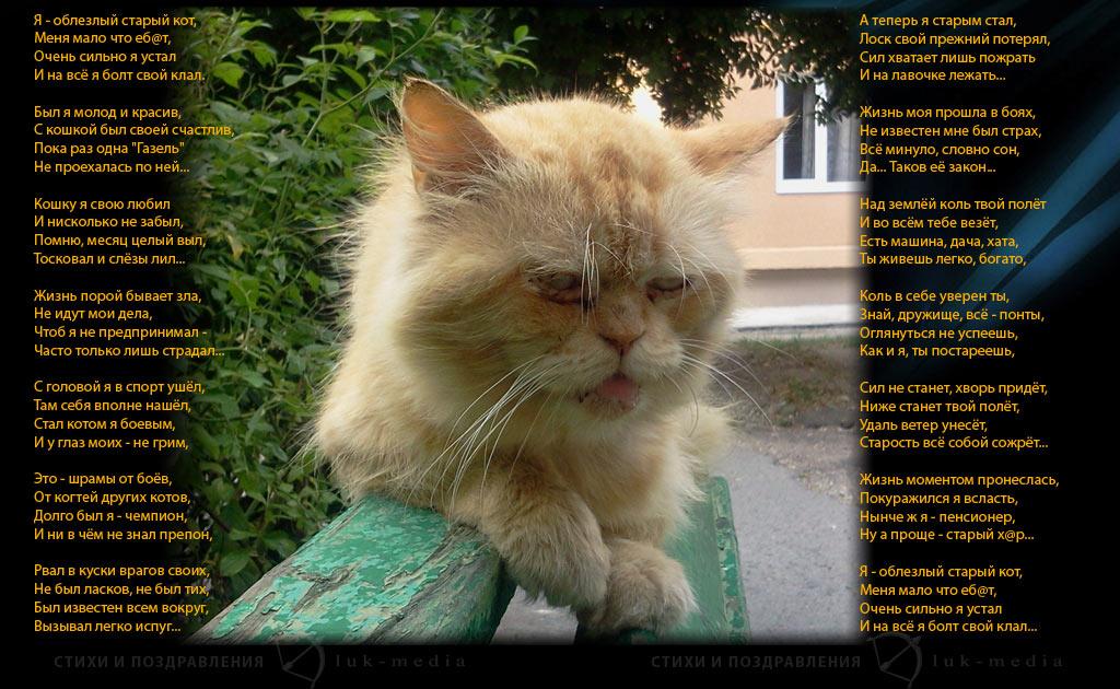 Прикольные стихи к подарку кошка 41