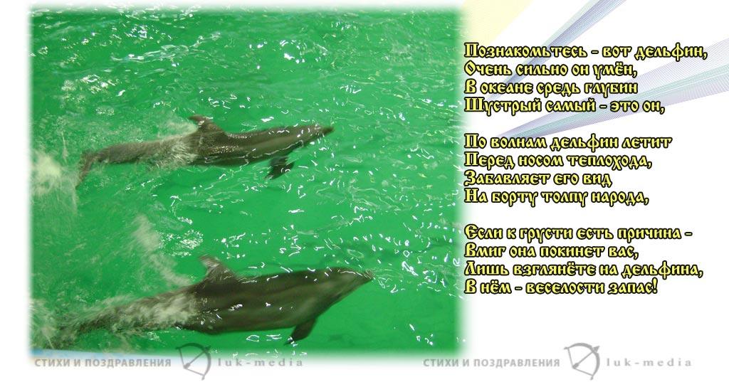 фото и рассказ о дельфинах